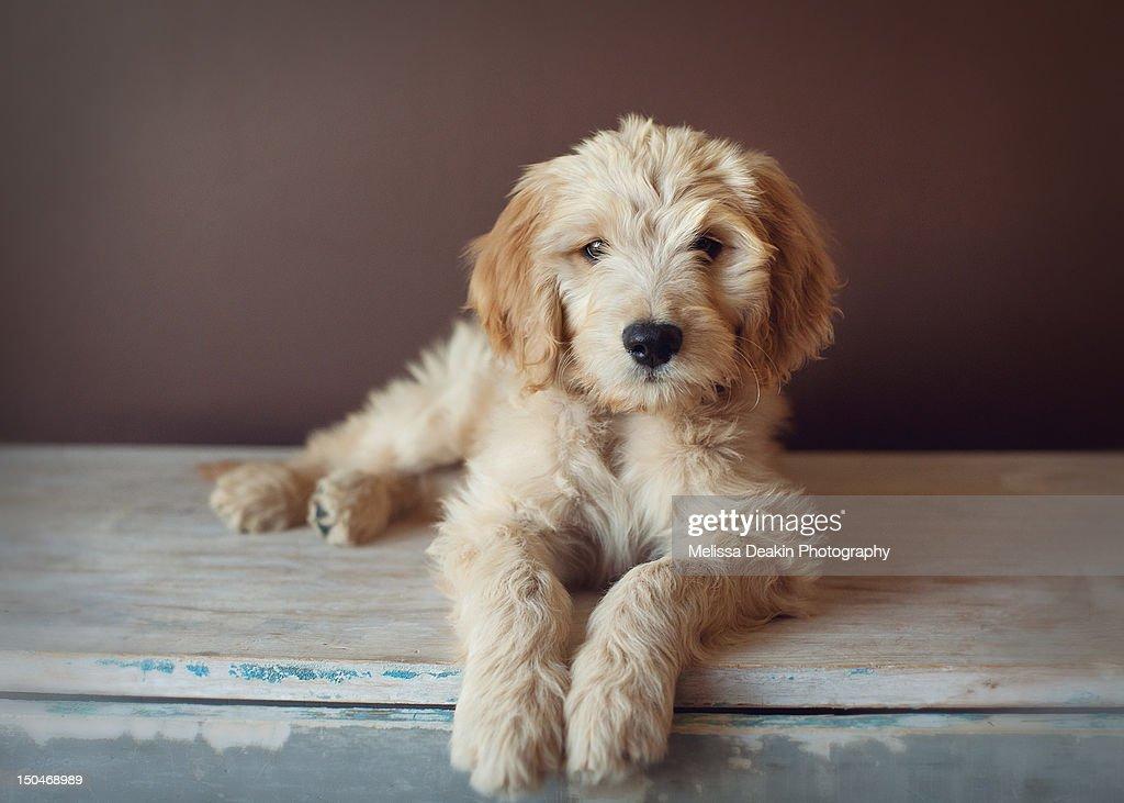 Sweet puppy : Stock Photo