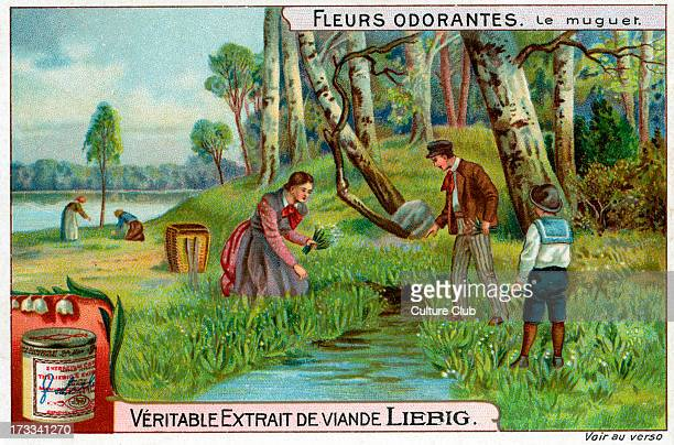 Lilly of the Valley 1911 Liebig Meat Extract collectible card