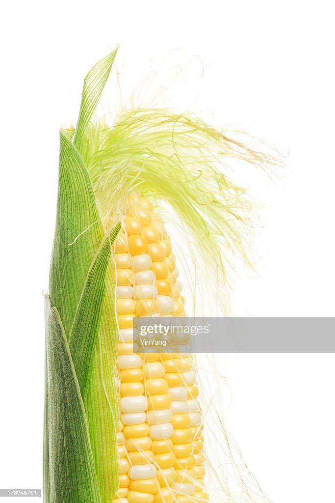 Sweetcorn, Corn on the Cob with Silk, Husk Freshly Peeled