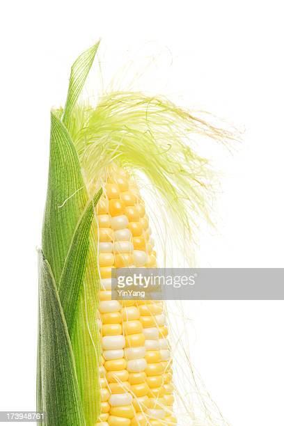 Zuckermais, Maiskolben und Seide, Hülse frisch Geschält