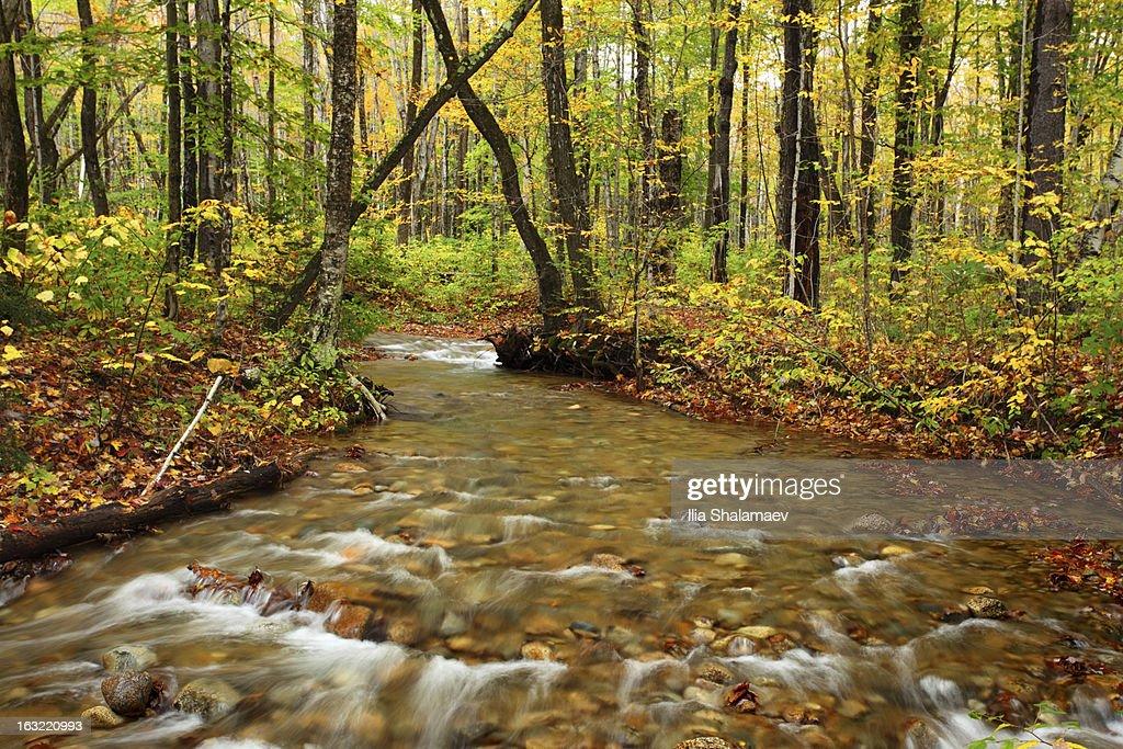 Swift gorge in autumn forest