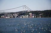 Swimmers compete in the 27th annual Bosphorus CrossContinental Swimming Race organized by the Turkish Olympic Committee in Istanbul Turkey on July 26...