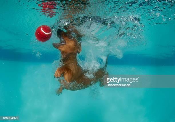 Perro de natación