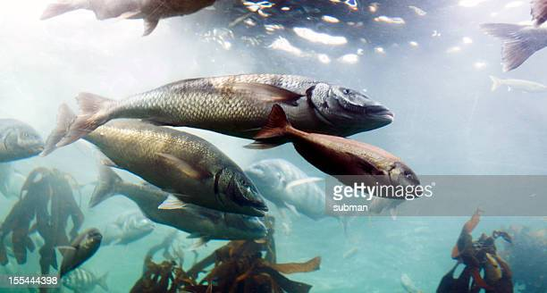 Galleggiante pesci in Acquario