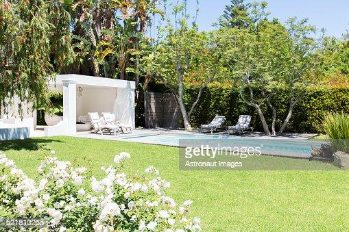 Swimming pool and backyard of modern house