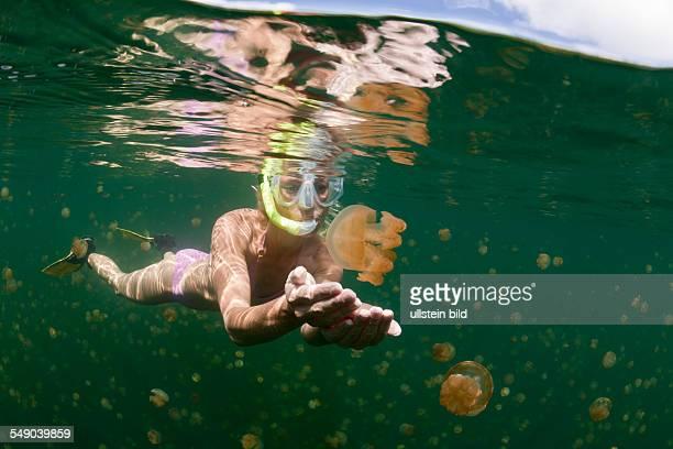 Swimming with harmless Jellyfishes Mastigias papua etpisonii Jellyfish Lake Micronesia Palau