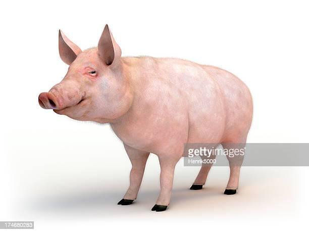 La peste porcina Aislado en blanco con trazado de recorte