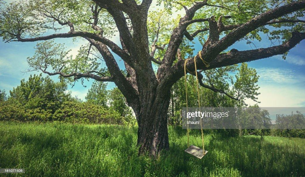 Swing the Summer Away : Stock Photo