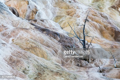 Swirling calcium deposits engulf a small tree, Wyoming, USA : Bildbanksbilder