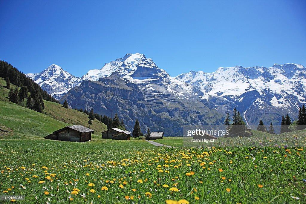 Swiss Alps, Mürren : Stock Photo
