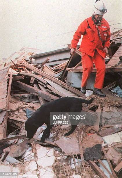 Swiss mountain dog and a rescue worker search for missing people through the wreckage of houses 19 January after the 17 January earthquake Swiss...