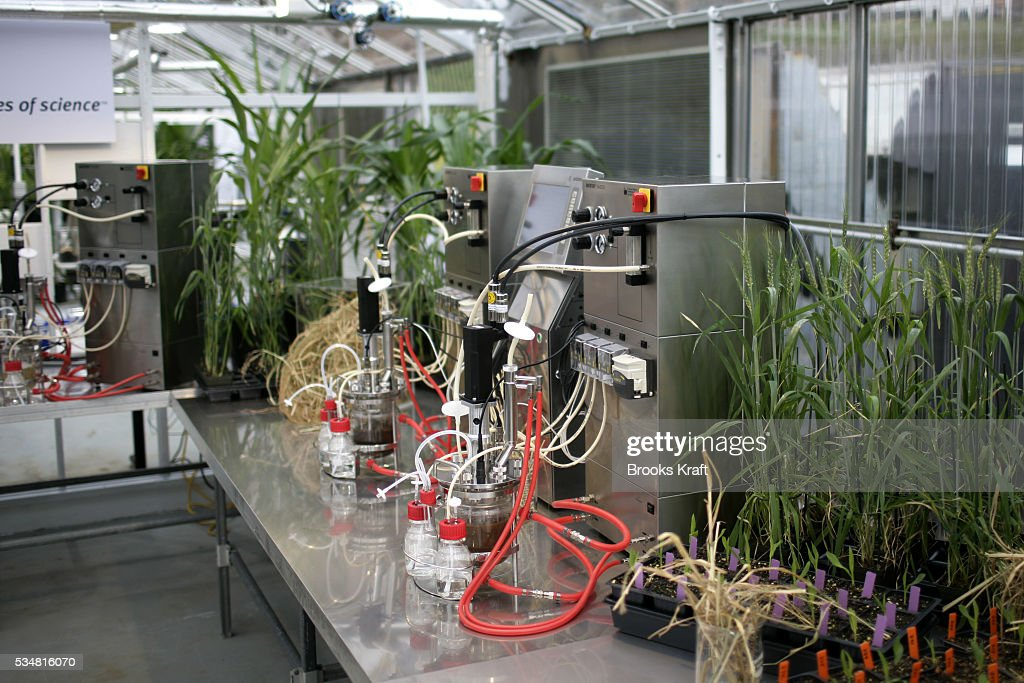 Switchgrass corn wheat and woodchips go through a fermenting process at an experimental energy source display at DuPont The alternative sources of...