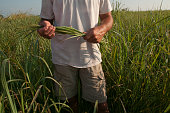 Switchgrass Production in Tennessee