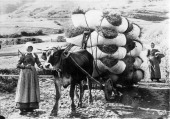 Switzerland canton of Graubuenden Lower Engadine valley transport of hay with a cart probably in the 1910s