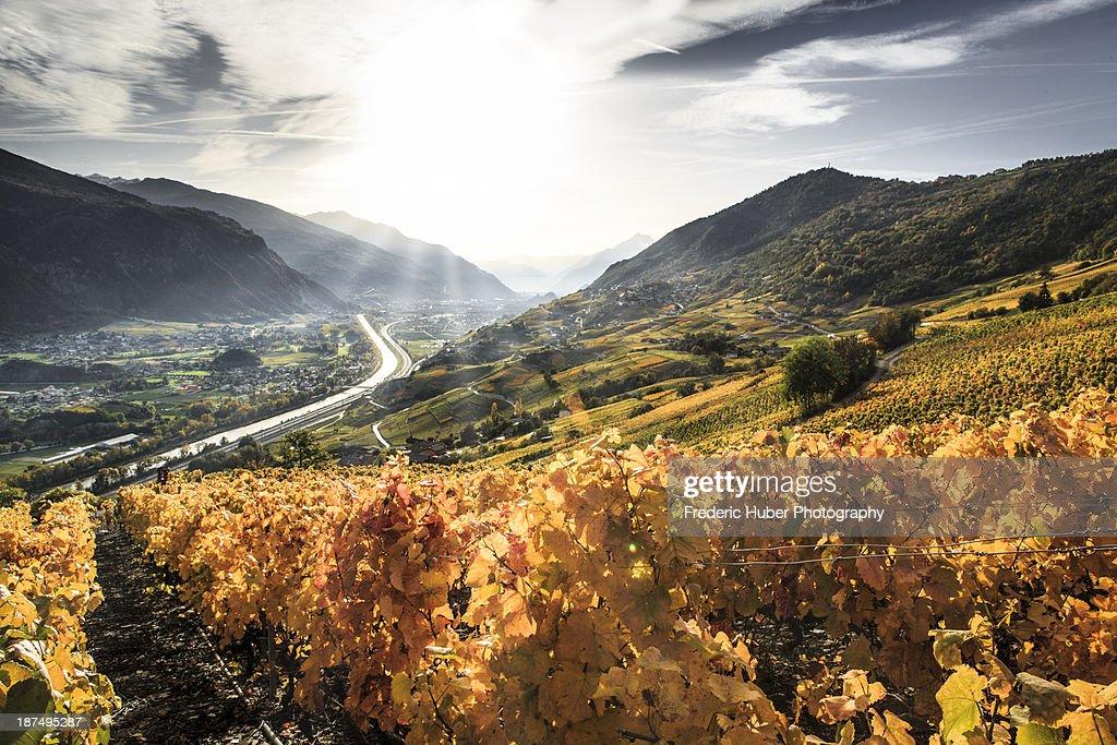 Switzerland (Valais/Wallis): Golden Fall