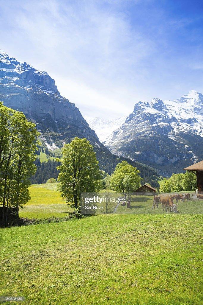 Switzerland landscape : Stock Photo