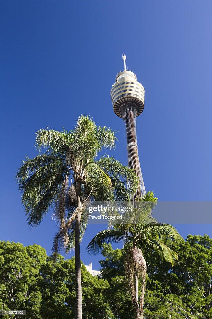 Sydney Tower, Sydney : Stock Photo