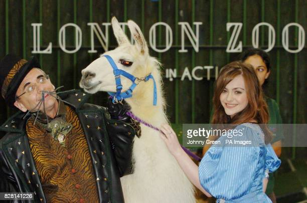 Sylvester McCoy as 'King Rat' and Cassandra Compton as 'Alice Fitzwarren' meet a llama at a preview of the pantomime 'Dick Whittington and his...