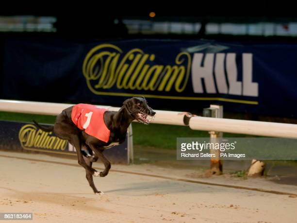 Sylvias Chloe wins the Newcastle BAGS race eleven during the William Hill All England Cup Festival at Newcastle Greyhound Stadium PRESS ASSOCIATION...