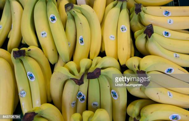 Symbol photo on the topc fruit nutrition health food scandal etc The photo shows Bananas