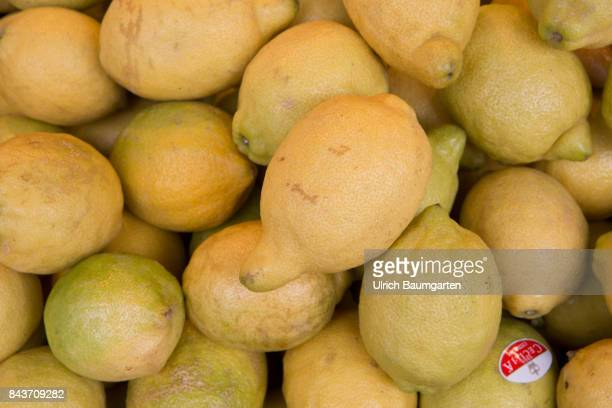 Symbol photo on the topic fruit nutrition health food scandal etc The photo shows untreated lemons from Italy