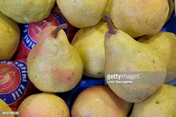 Symbol photo on the topic fruit nutrition health food scandal etc The photo shows Williams pears from Italy
