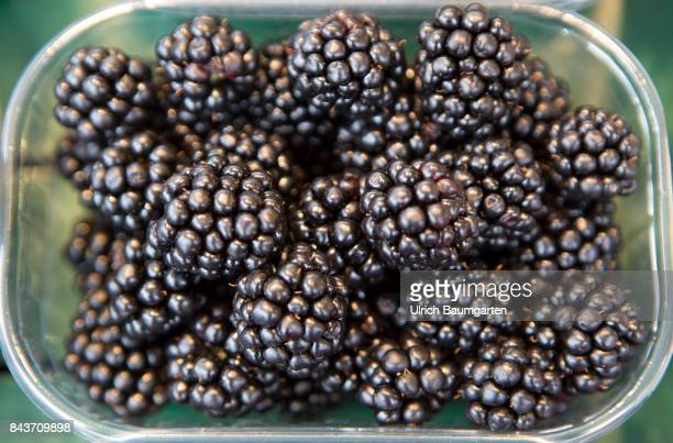 Symbol photo on the topic fruit nutrition health food scandal etc The photo shows blackberries