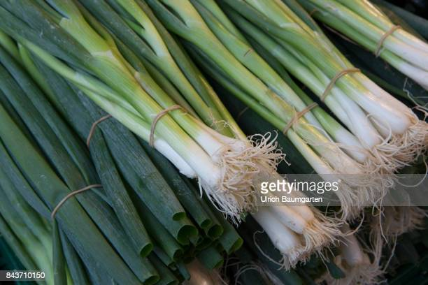 Symbol photo on the topic spices vegetables nutrition health food scandal etc The photo shows bulb vegetables
