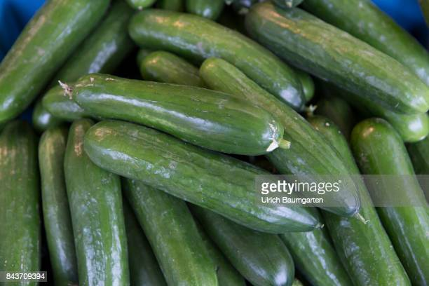 Symbol photo on the topic vegetables nutrition health food scandal etc The photo shows salad cucumbers
