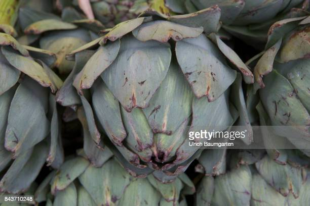 Symbol photo on the topic vegetables nutrition health food scandal etc The photo shows artichokes from France