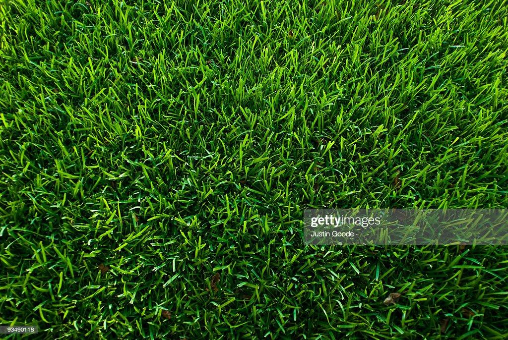 Symmetrical Grass : Stock Photo