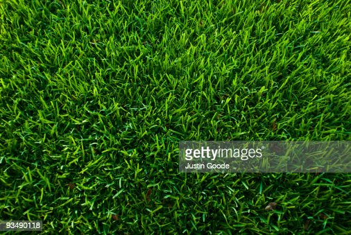 Symmetrical Grass