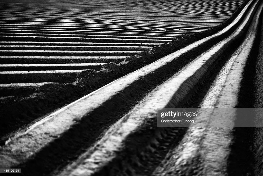 . Symmetrical lines of freshly planted potato furrows cross the countryside in a field on April 16, 2014 in Great Budworthy, United Kingdom.