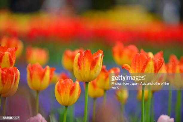 Symphony of Spring Colors