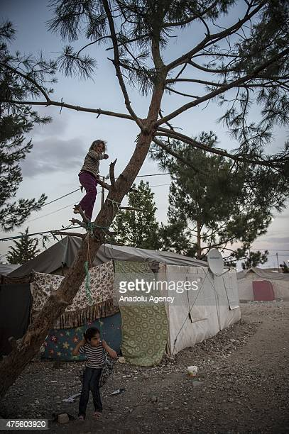 Syrian child refugee climbs on a tree as other rides on a swing among the tents at a refugee camp site which is constructed by Turkish Prime...