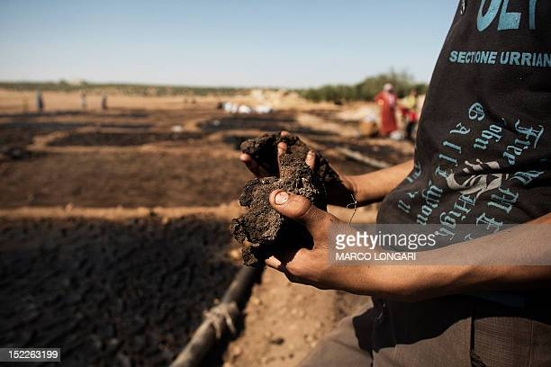 Syrian man shows the waste of pressed olives mixed with water and left to dry in the sun in a field near the battled Syrian city of alBab on...