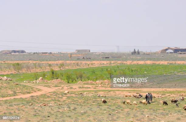 Syrian shepherds tend their flock near the damaged Shayrat airfield at the Syrian government forces military base targeted earlier overnight by US...
