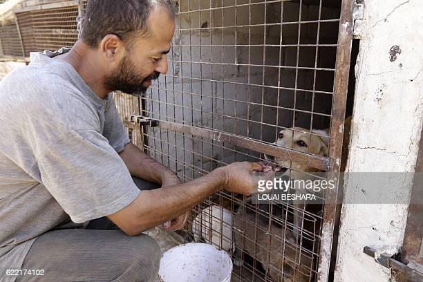 A Syrian volunteer feeds a dog at a farmturnedshelter run by the Syrian Team for Animal Rescue in Sahnaya 14 kilometres southwest of Damascus on...