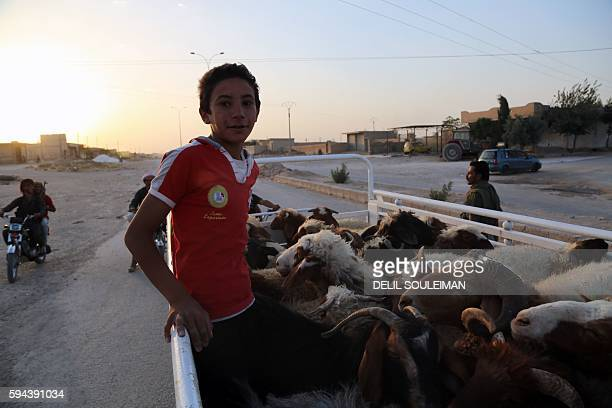 A SyrianKurdish boy sits in the back of a truck with his herd as he returns to the northeastern Syrian city of Hasakeh on August 23 after regime...