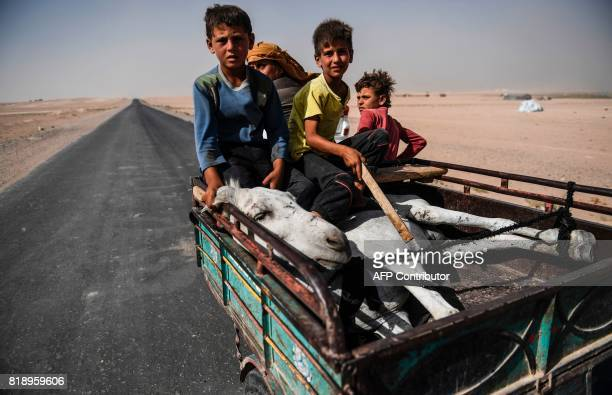 TOPSHOT Syrians carry a donkey on a trailer on the outskirts of Raqa on July 19 as Syrian Democratic Forces a KurdishArab alliance are battling to...