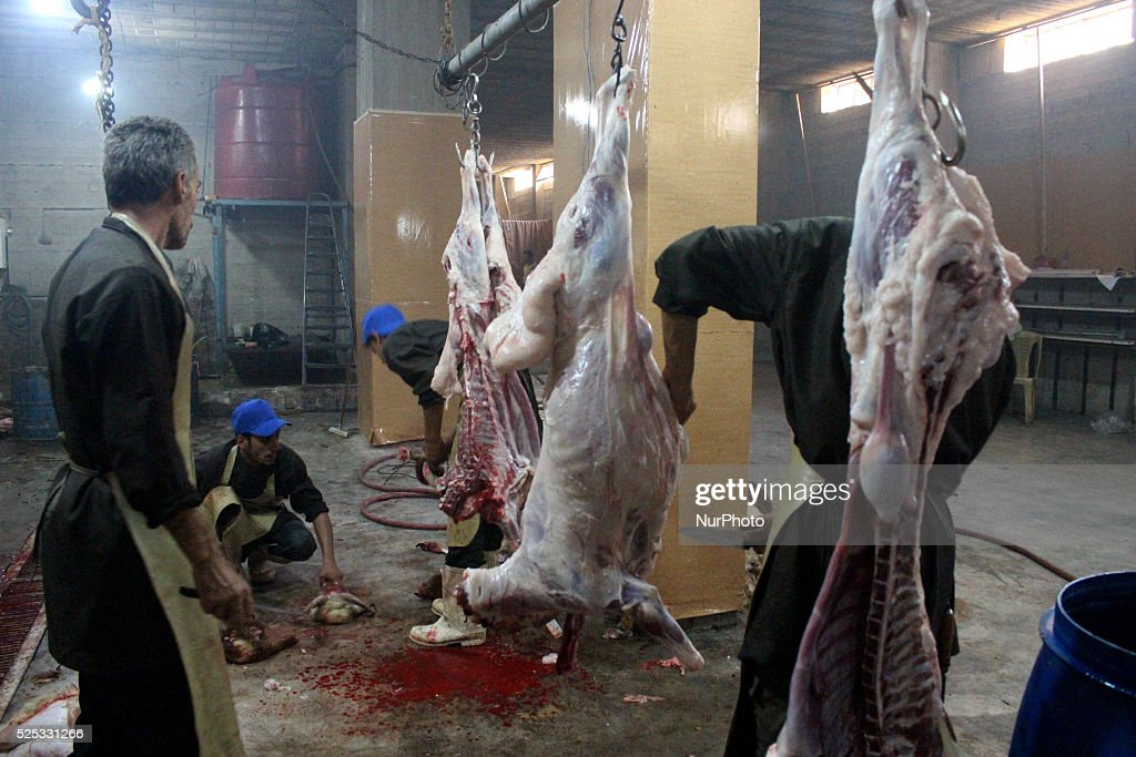 Syrians slaughter sheep during the Muslim holiday of Eid alAdha which commemorates Abraham's willingness to sacrifice his son for God Rif Dimashq...