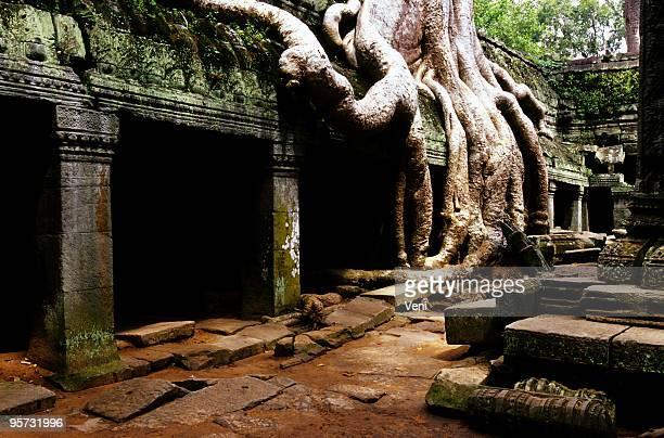Ta Phrom, Angkor Wat, Cambogia