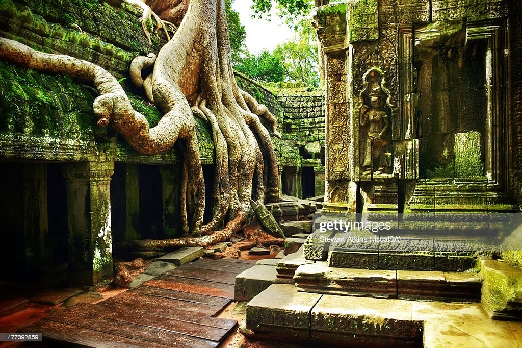 Ta Prohm Angkor Wat Cambodia : Stock Photo