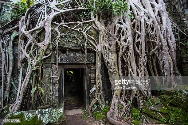 Ta Prohm is the modern name of what was originally called Rajavihar Built in the Bayon style in the late 12th century Ta Prohm was founded as a...
