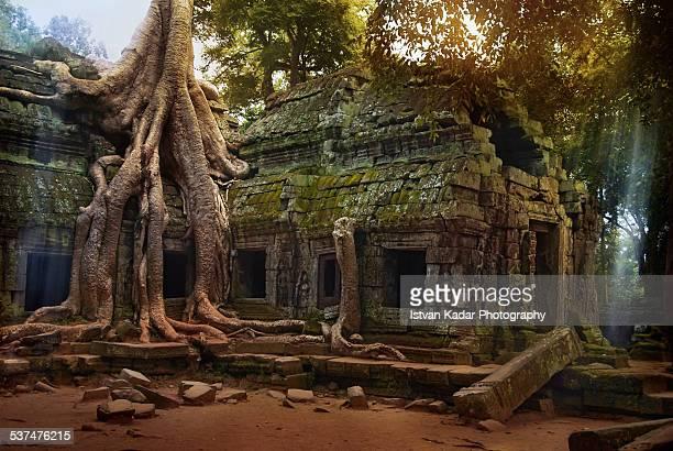 Ta Prohm Temple in Cambodia