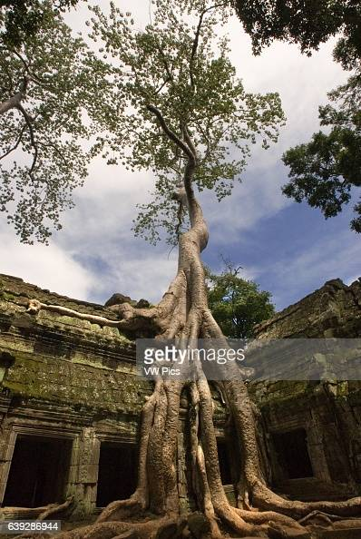 Ta Prohm Temple Ta Prohm is as seductive as Lara Croft The site of some of her cinematic adventures it is a series of dark galleries and pillars held...