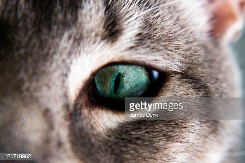 Tabby Cat Eye Detail : Stock Photo