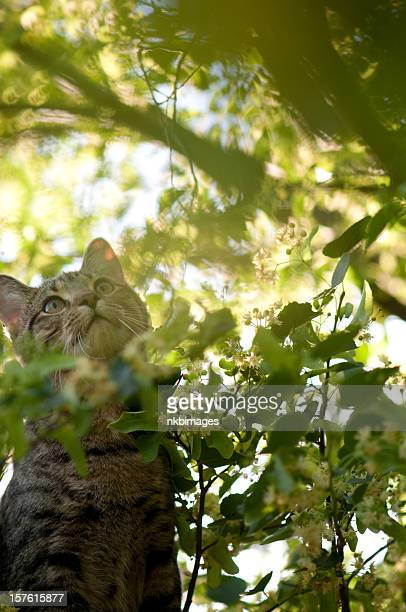 Tabby cat in tree rays of sunlight filtered through branches