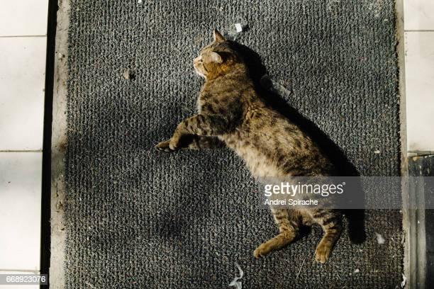 Tabby cat lying on doormat