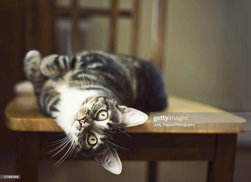 Tabby cat on table : Stock Photo